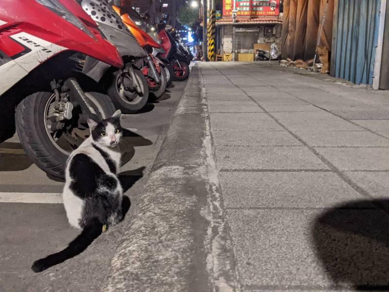 街貓遭獵殺的地點,有許多流浪貓在深夜遊蕩。記者陳弘逸/攝影