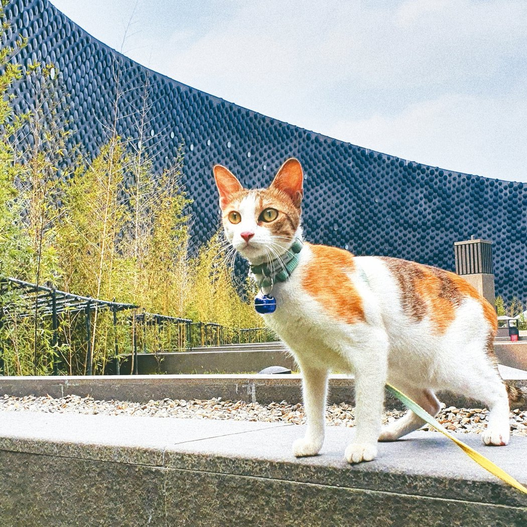 叮咚是在公園撿到的流浪貓。 圖/林賢柔提供