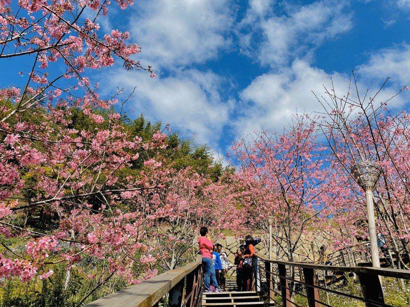 阿管處日前以櫻花季觀光宣傳影片「春櫻夜 遊園驚夢」,勇奪「2020日本國際觀光影像節 最佳東亞影像獎」。圖/阿管處提供