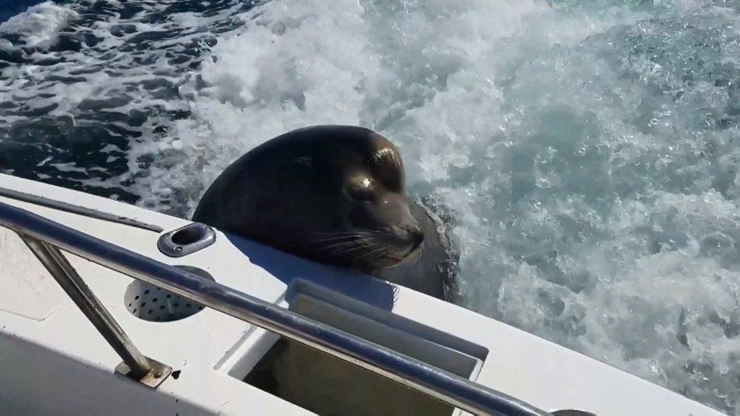 一群遊客2月中在墨西哥乘船海釣,途中遇到一隻厚臉皮的海獅攀上船,將他們的戰利品當...