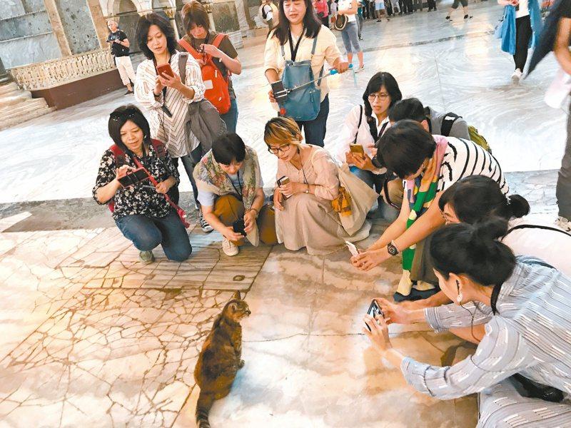 傳說,貓君臨蘇菲雅大教堂,眾人臣服於牠腳下。(攝影/柯欣妤)