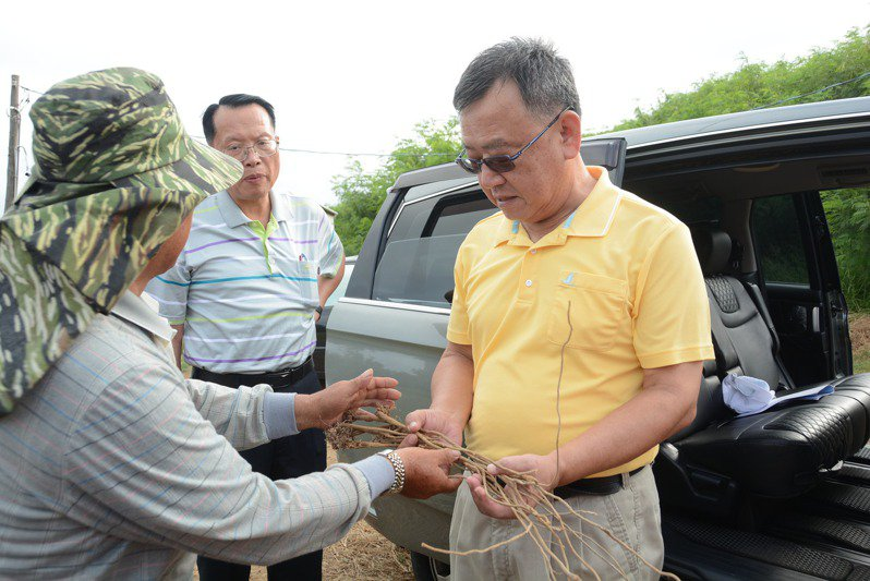 澎湖縣長賴峰偉今在縣務會議,指示發展「 一條根」為澎湖特色產業。圖/澎湖縣政府提供