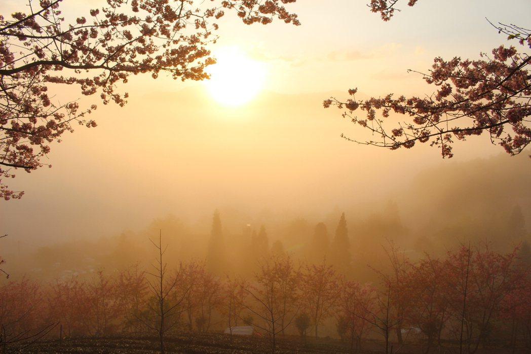 五峰鄉山上人家森林農場,現在除賞櫻,還能觀星、看雲海、看日出,滿足攝影愛好者的所...
