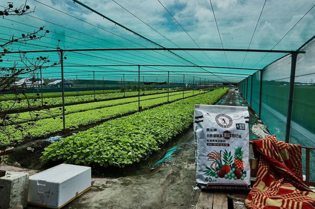 台肥製肥原料進貨來源穩定且庫存充足可完全供應農需 台肥公司/提供