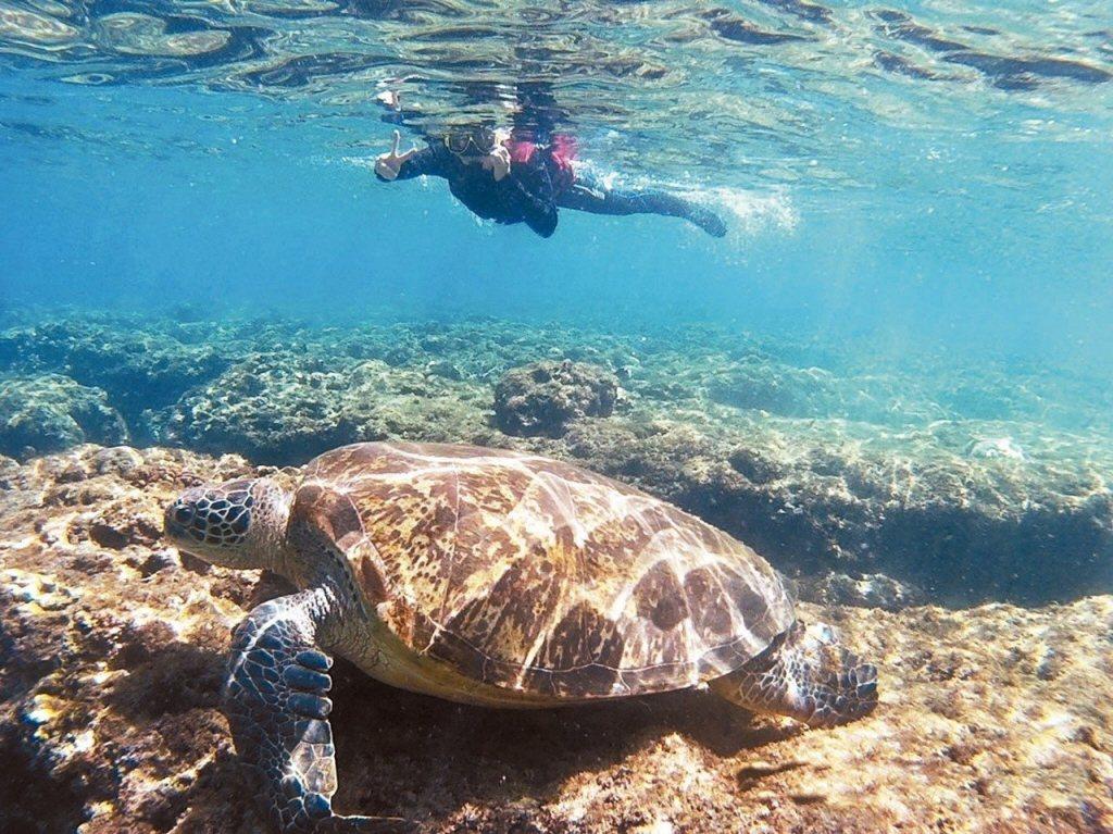 國立海生館副館長陳德豪研究團隊,對海生館收容從各地送來的廿一隻海龜做調查,發現體...