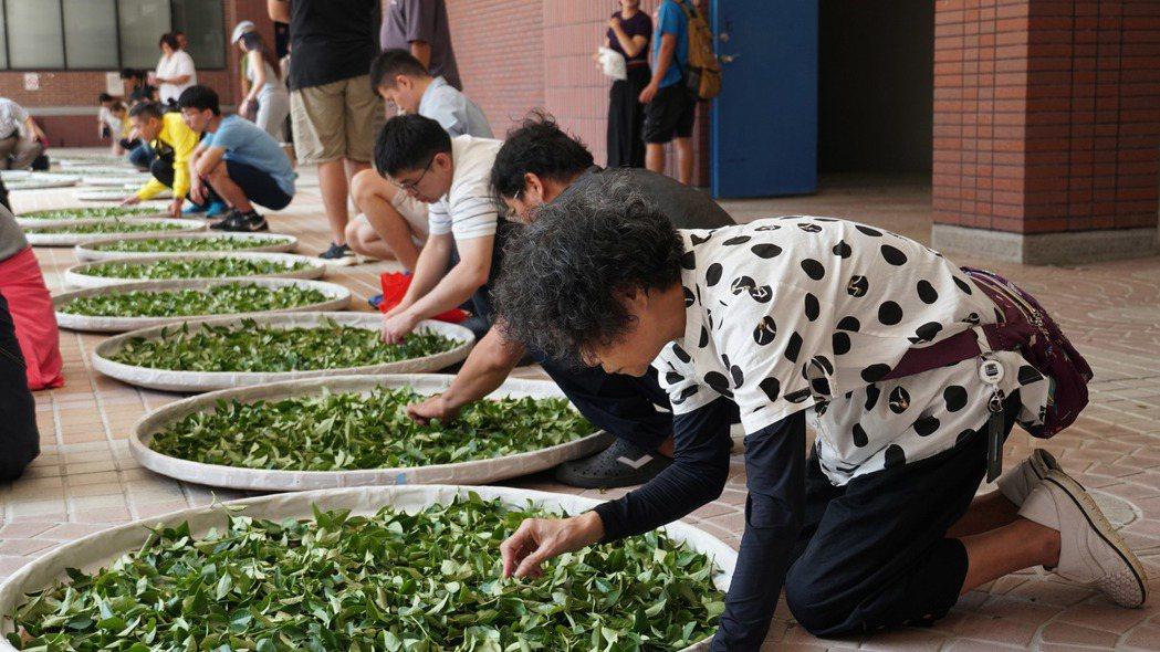 大葉大學獲教育部大學社會責任實踐計畫獎助,輔導茶農技術升級。 大葉大學/提供。