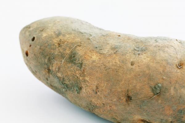 盡量挑選表皮完整沒凹洞的地瓜。 圖片來源/台灣好食材(王正毅)