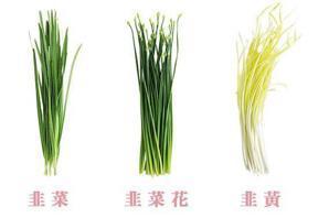 韭菜、韭菜花、韭黃有什麼不一樣?春天該吃哪樣?