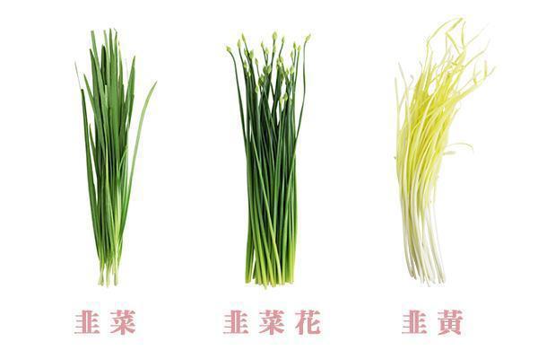 圖片來源/《餐桌上的蔬菜百科》