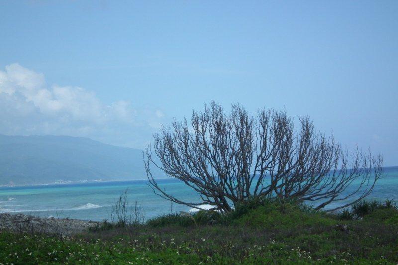 百年夫妻樹雖已枯萎死亡,其特殊樹形,搭配海岸美景,形成獨特美感,吸引遊客拍照取景...