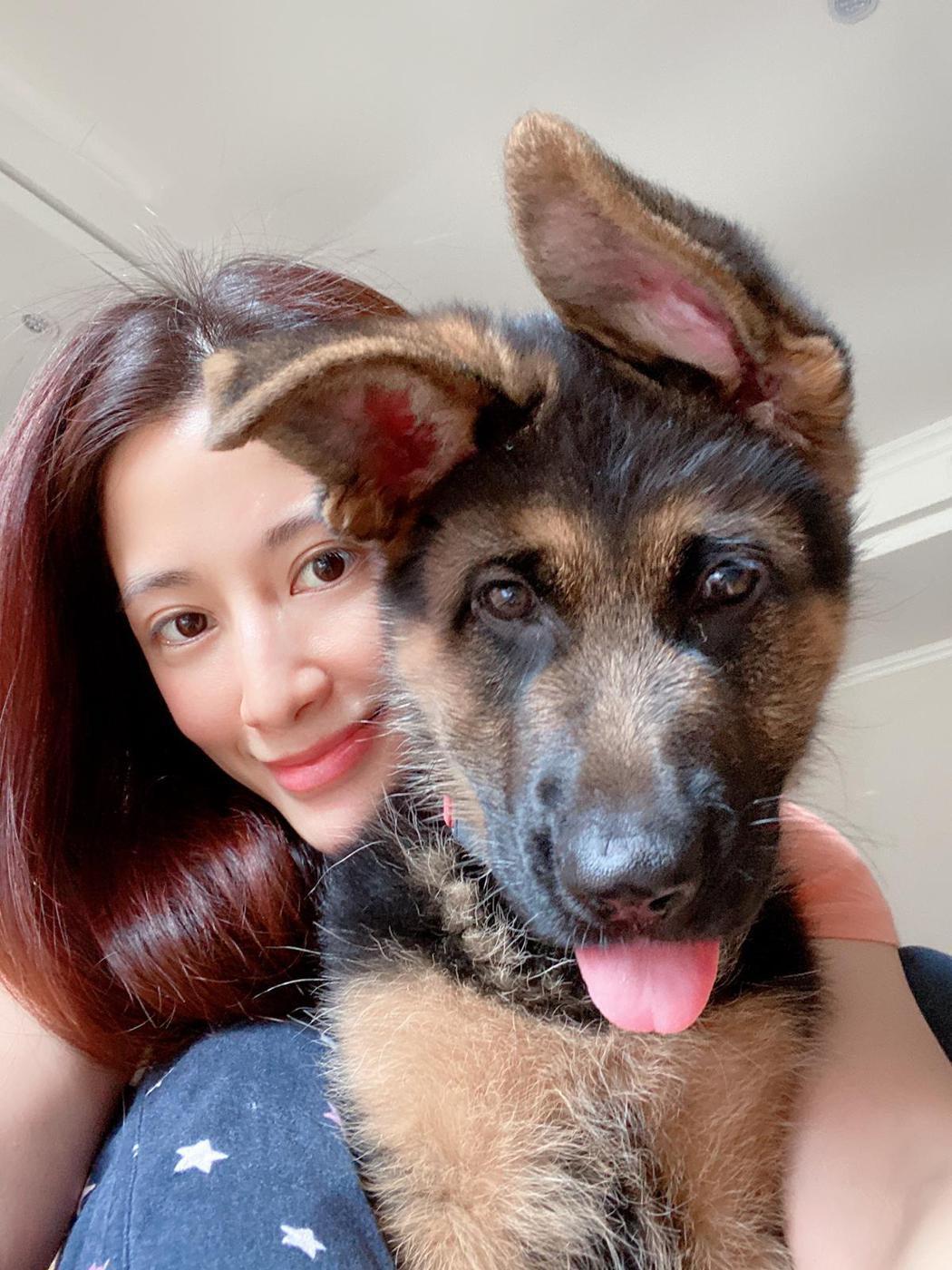 李蒨蓉天天用相片記錄愛犬的成長歷程。圖/艾迪昇傳播提供