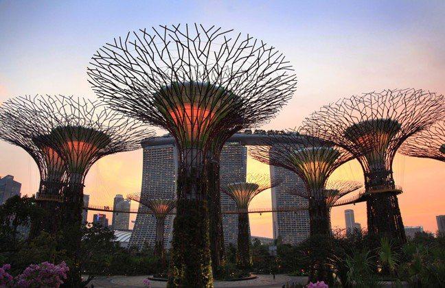 新加坡濱海灣花園。 美聯社