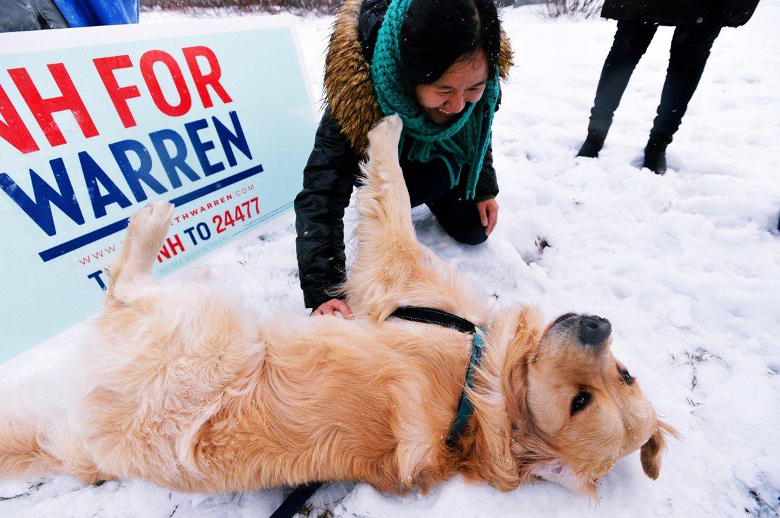 華倫飼養的黃金獵犬貝利在競選活動現場。 圖/法新社