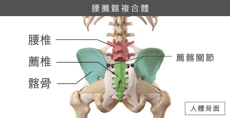 腰薦髂複合體因環環相扣、牽一髮動全局,成為疼痛共同體。 圖/菁英診所 提供