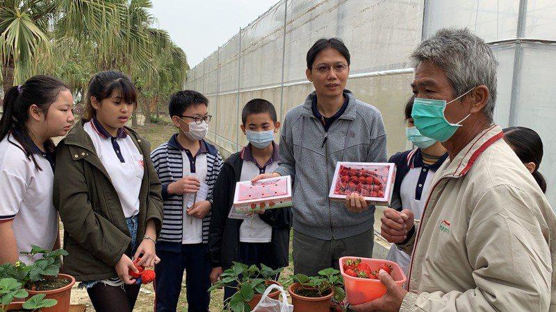 台南市官田國小學生要培育「官小香」新品種草莓。圖/校方提供