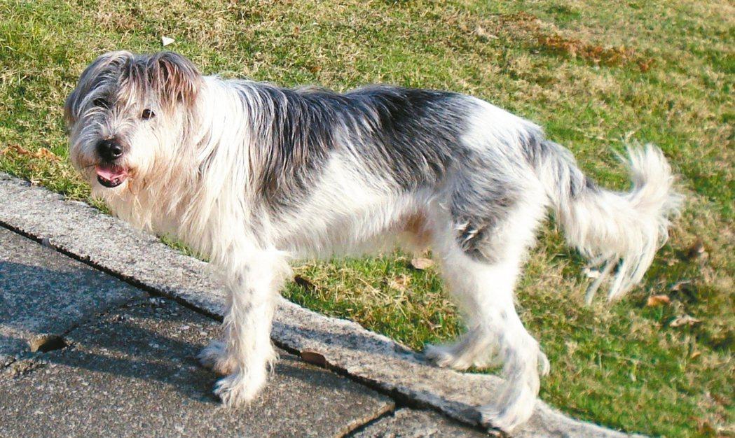 我的馬分算不上萌犬,牠是隻來自收容所的米克斯 。 圖/李香林提供