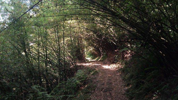 二子坪步道。 圖/Wikimedia