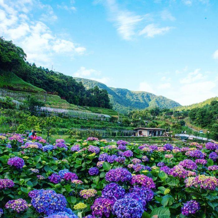 大梯田花卉生態農園。 圖/IG, samyuan_tw