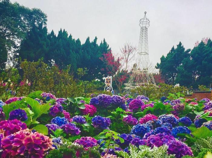 花卉試驗中心。 圖/IG, zhaoxianwu3214