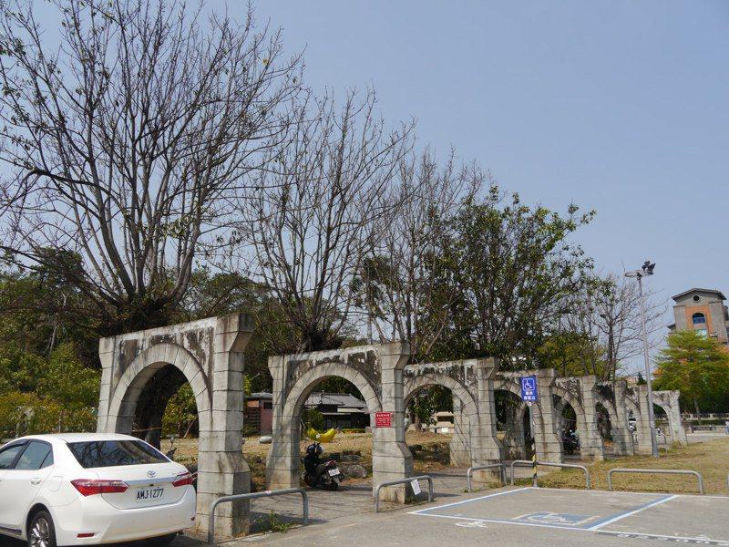 高雄旗山體育場四周栽種40棵印度橡膠樹,近日高達三分之一的橡膠樹陸續枯萎瀕死。記者徐白櫻/攝影
