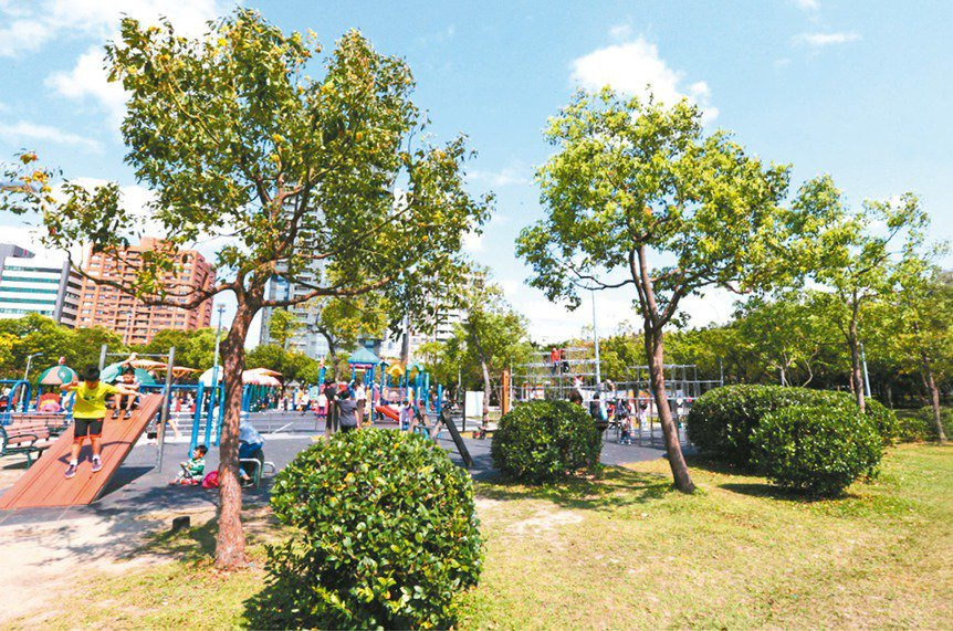 中央銀行前總裁彭淮南當年手植的樟樹一度長不大,經改良土壤等作法後明顯茁壯。 記者...
