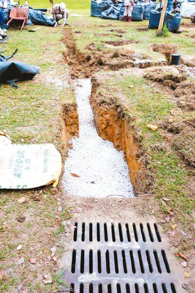 日本樹木醫師與台灣團隊挖開總裁樹根系,改良土壤和排水,讓總裁樹擺脫生長困境。 圖...