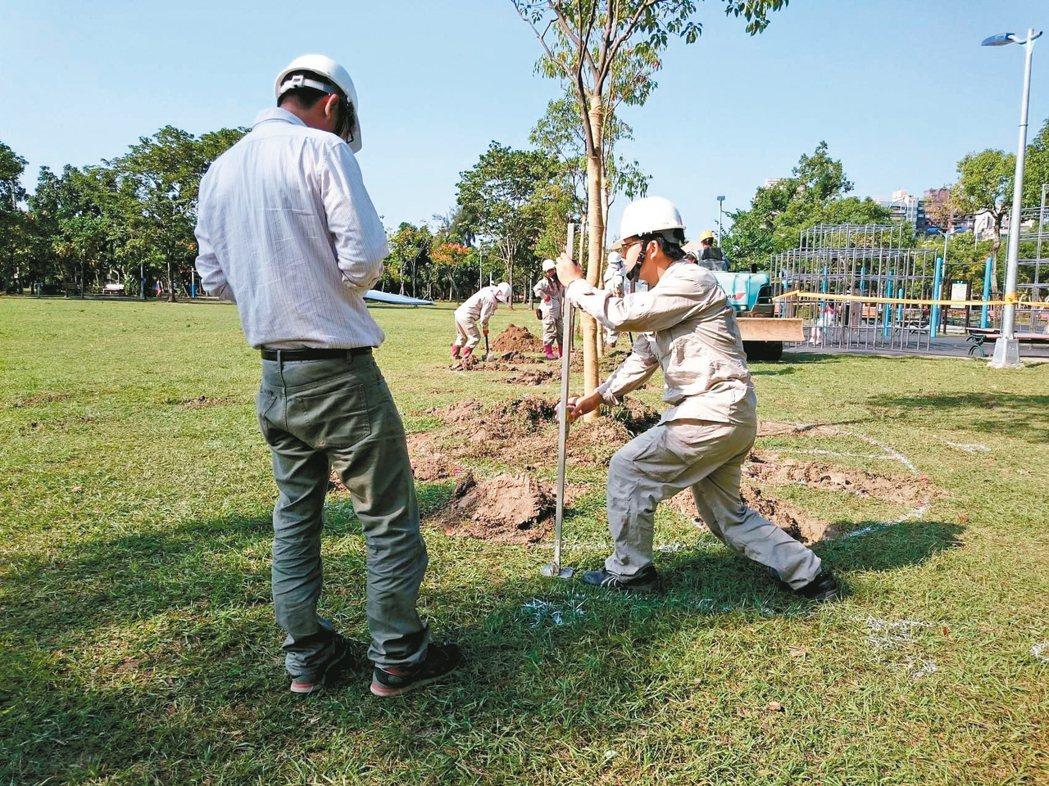 五年前大安森林公園六棵「總裁樹」因颱風全倒,基金會邀請日本樹醫來台診治。 圖/大...