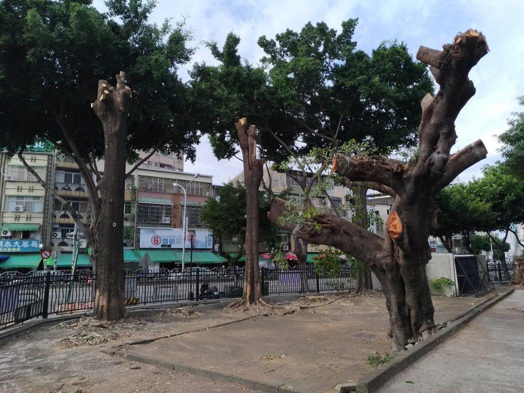 樹木修剪不當,斷頭修剪,會傷及核心主幹。圖/台灣護樹協會提供