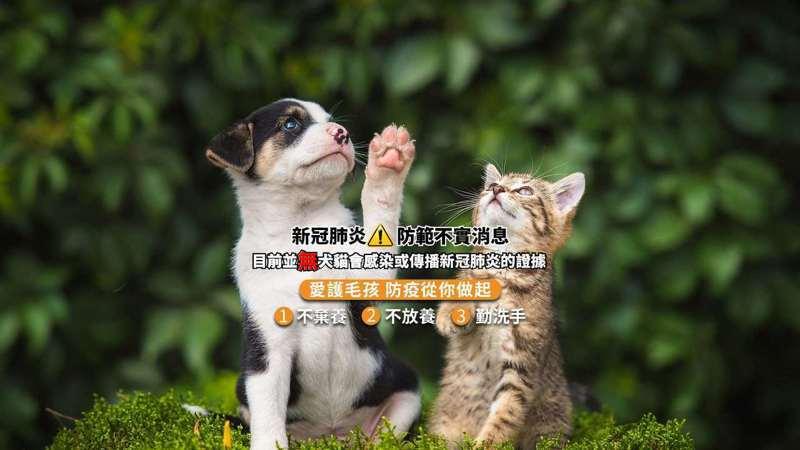 香港近來犬隻檢出新型冠狀病毒,雲林縣府呼籲飼主勿過度恐慌。圖/雲林縣府提供