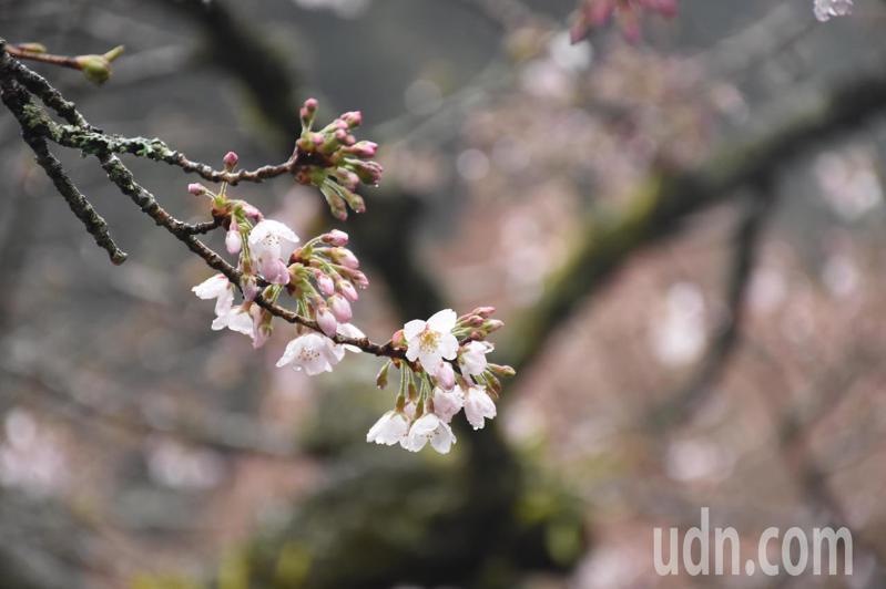 初春花草香氣沁入,飽蘸天地蓬勃生機,春天溫潤的跫音,敲開盎然生氣的感知。記者陳玫伶/攝影