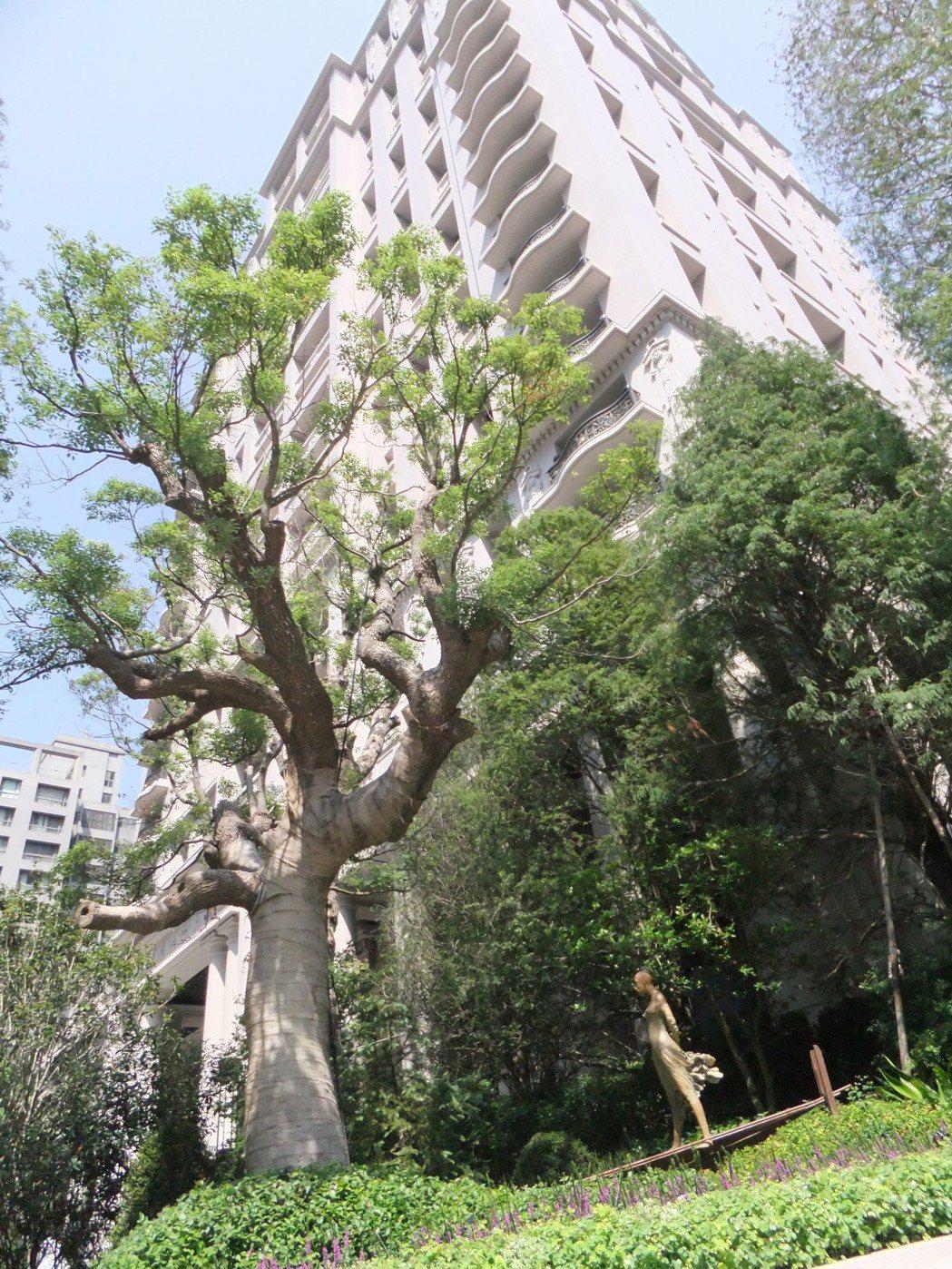 一般的行道樹、公園樹隨便養、隨便大,名貴的樹則在私人豪宅社區裡被供為上賓。尤其豪...
