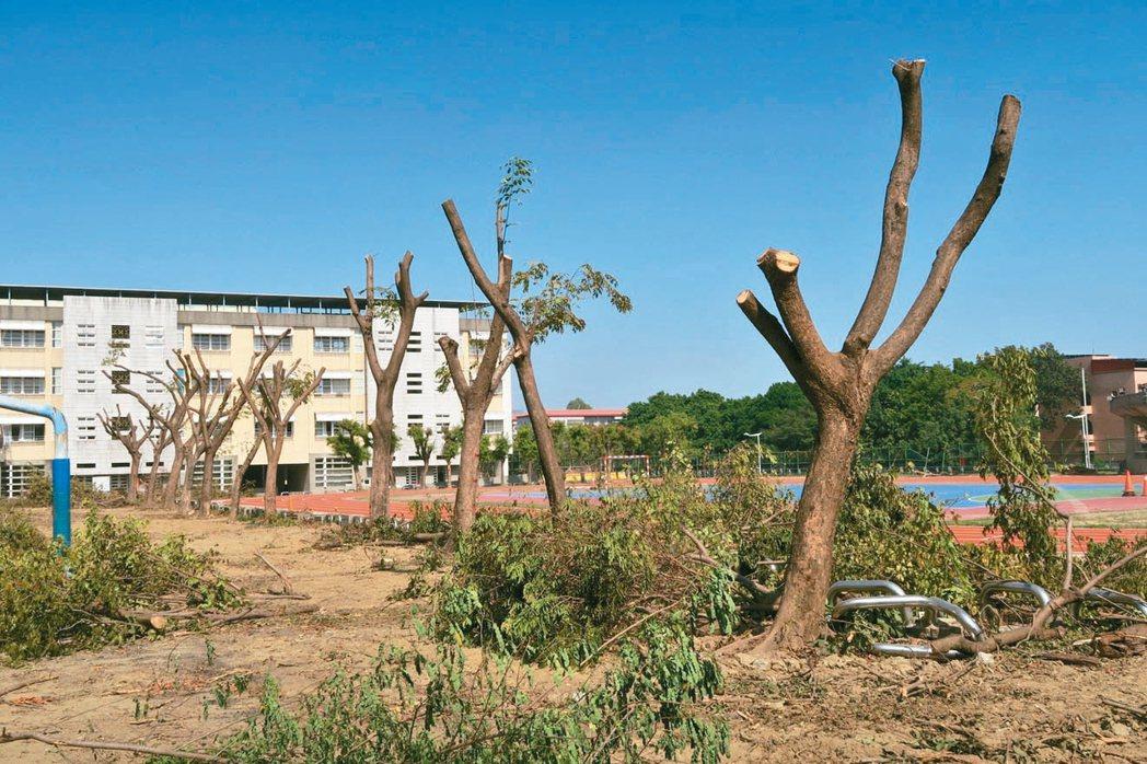 高雄中崙國中百餘棵校樹因樹叢太密、蚊子多,一夕之間遭大量砍除和斷頭式修剪,引發爭...