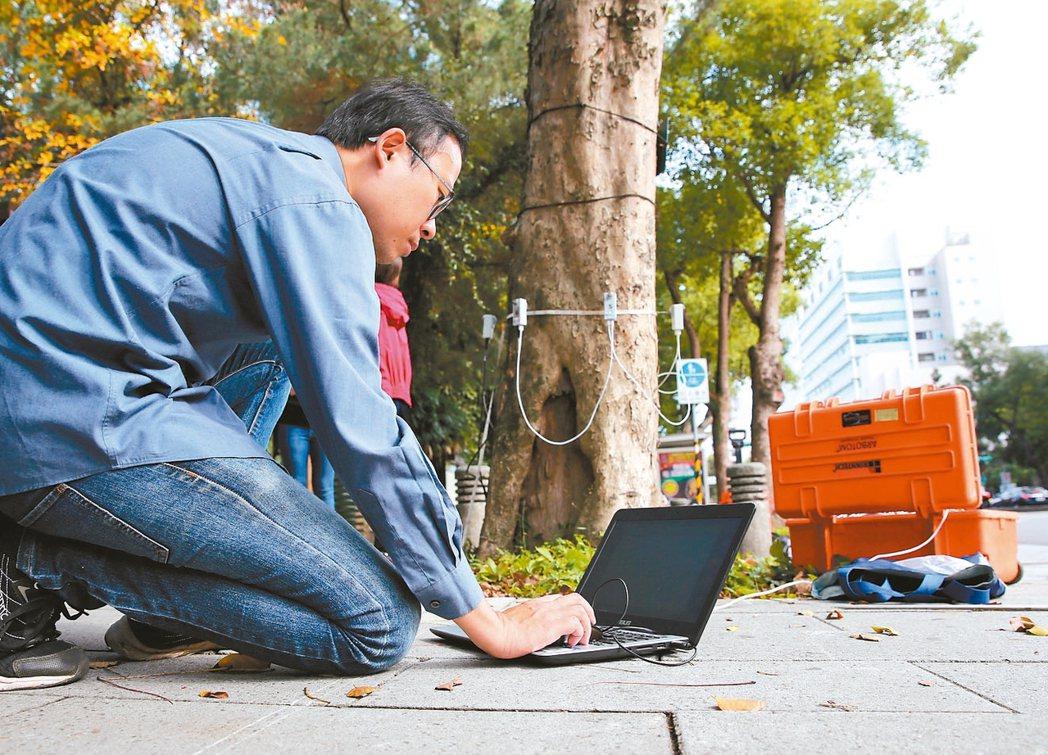 圖為樹藝師用儀器檢查,發現樹幹中空,有生命危險。 記者林澔一/攝影