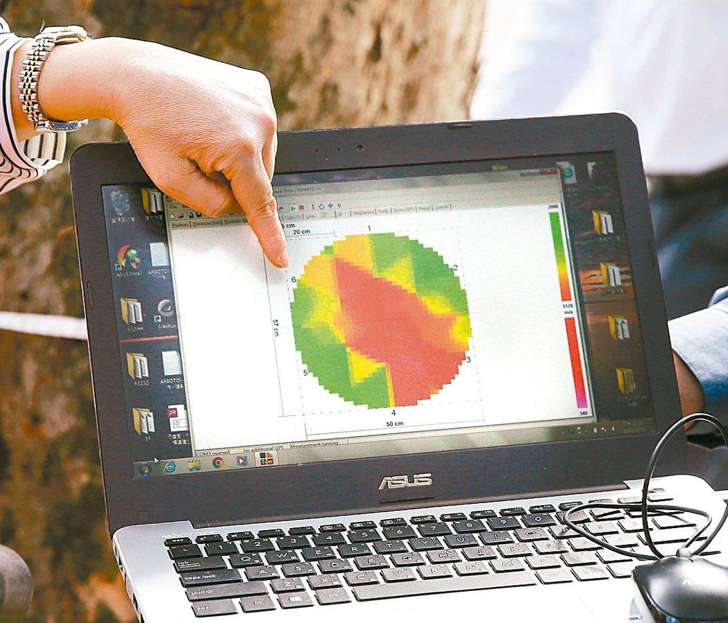 都會區樹木缺乏健康檢查履歷制度,圖為樹藝師用儀器檢查,發現樹幹中空(圖紅色區),...