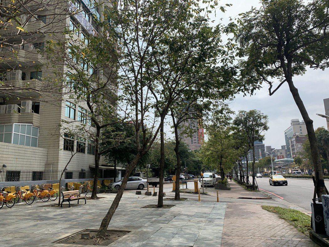 新北市長侯友宜今天在市政會議上強調要提升新北綠覆率,要「綠動」新北市,未來單一樹...