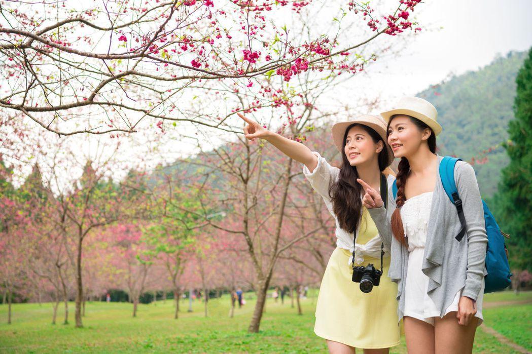 「愛台灣,向前行」,中壽旅平險回饋保戶獎品多多。 中壽/提供