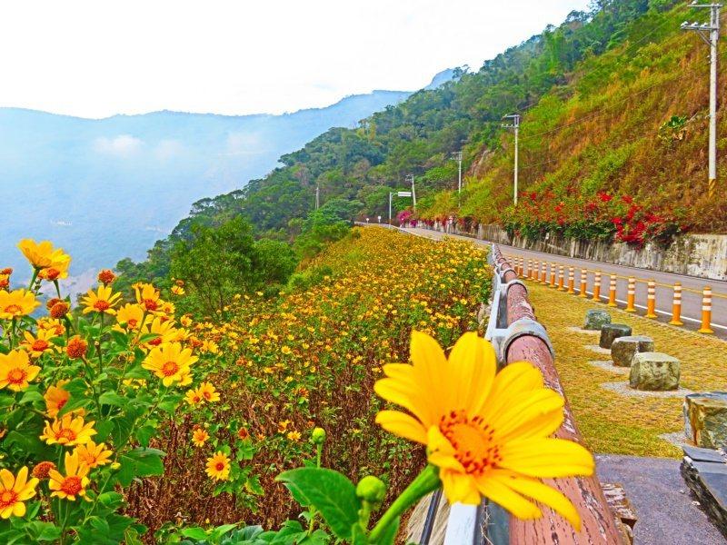 台24線霧台公路是四季皆宜的美麗花海公路。 圖/潘欣中 攝影