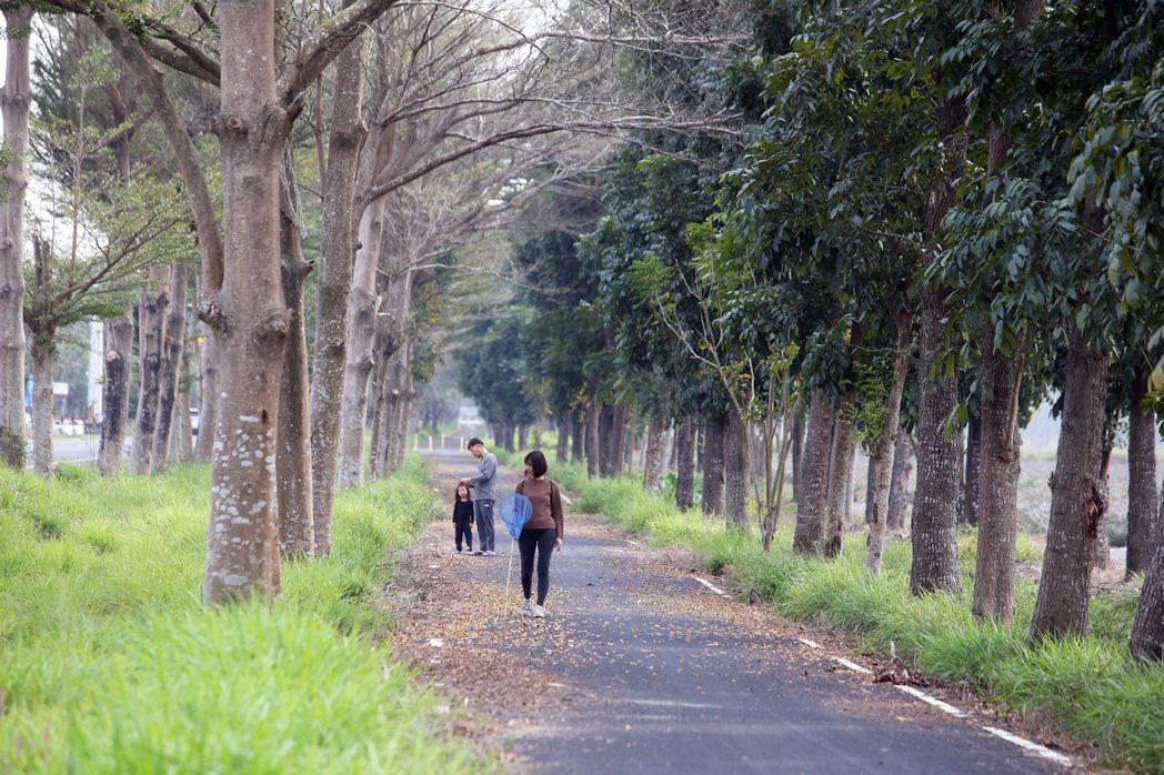 台糖公司計畫在屏東縣萬巒鄉新赤農場推動「農電共生」計畫,這裡當年配合政府政策平地...