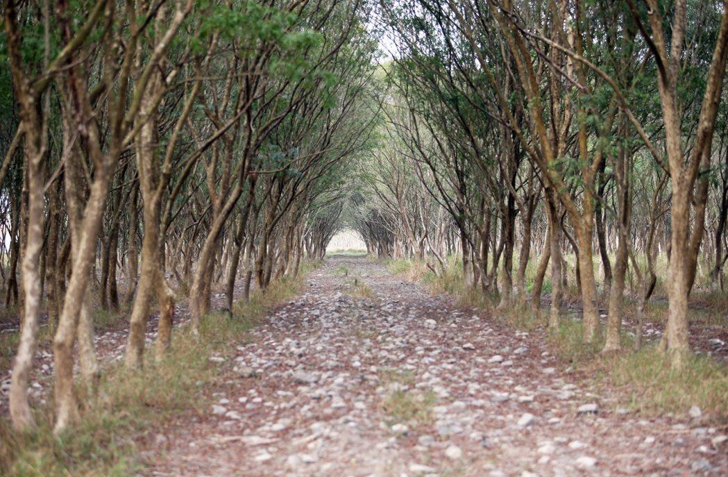 台糖公司計畫在屏東縣萬巒鄉新赤農場砍林種電,因綠樹已成林,引發居民反彈。記者劉學...