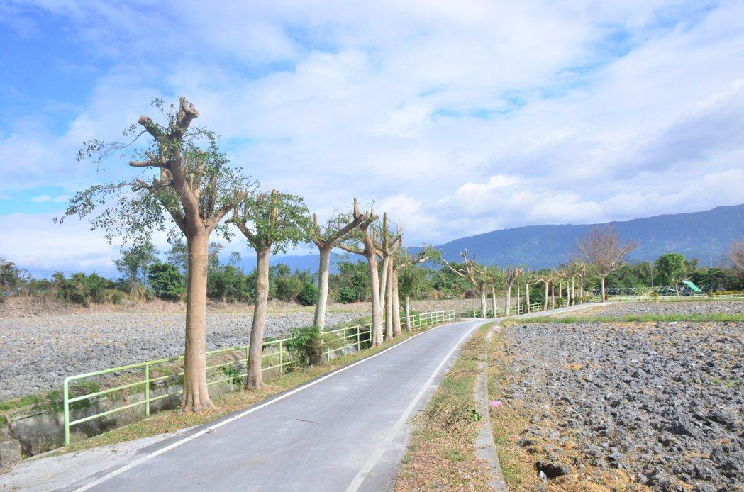 樹木常被不當修剪,圖為台東「關山環鎮自行車道」一段近3百公尺長的路樹被斷頭截枝。...