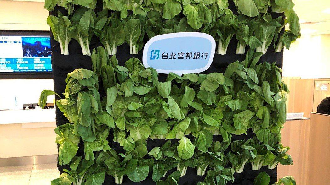 北富銀將在台北市的安和分行搭建一面美麗清新的蔬菜牆,牆上會「種」滿與小農合作採購...