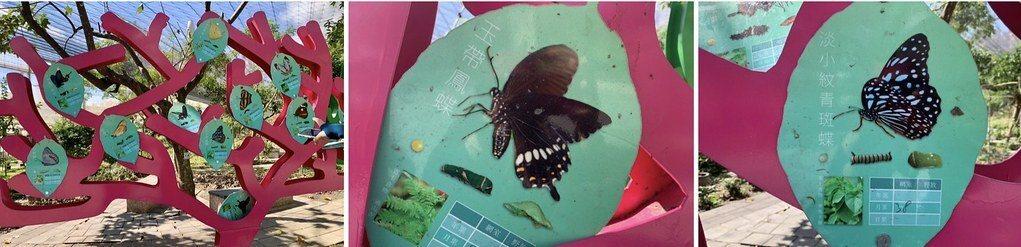 蝴蝶復育網室,十幾種蝴蝶品種的大型圖示解說,看看就知道剛才遇見了誰。