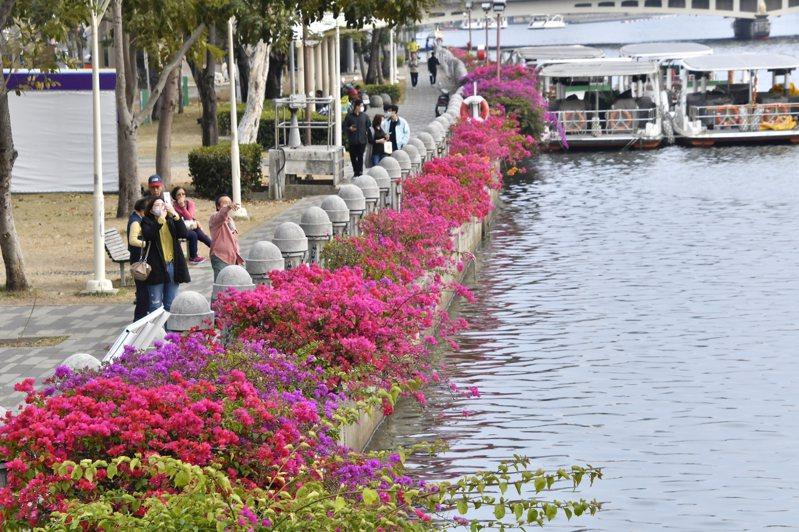 高雄市利用九重葛枝條懸垂性,栽植在愛河沿岸,搖曳著生動活潑氣息。圖/高雄市養工處提供