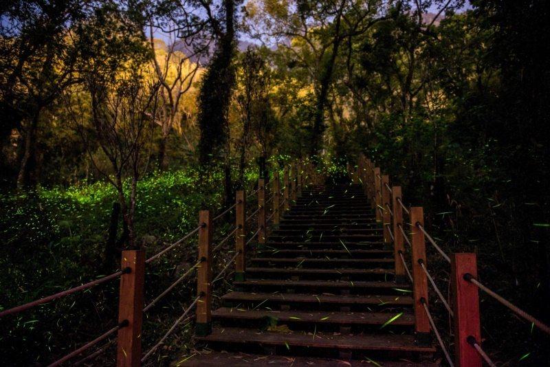 森林螢賓大道。 圖/高雄市那瑪夏區公所 提供