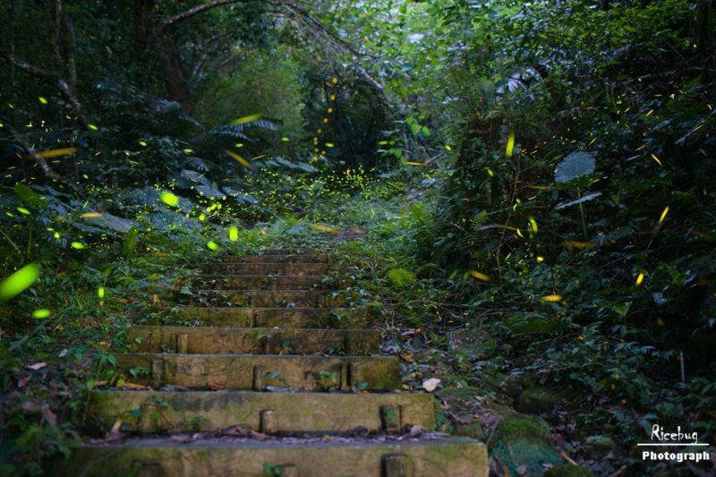 新竹內灣賞螢地點以東窩溪螢火蟲生態園區為主。 圖/內灣形象商圈發展協會 提供