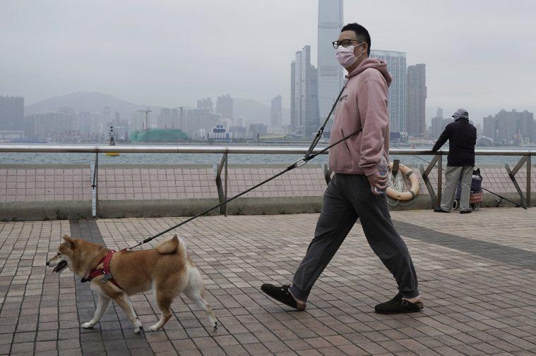 香港出現第2隻被測試出新冠肺炎病毒陽性反應的寵物狗,而主人先前也被確診。示意圖。...