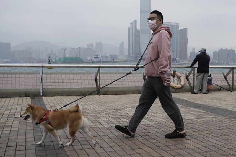 香港出現第2隻被測試出新冠肺炎病毒陽性反應的寵物狗,而主人先前也被確診。示意圖。 美聯社