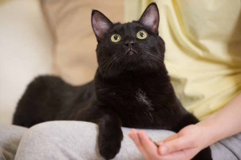 黑貓示意圖。圖/ingimage