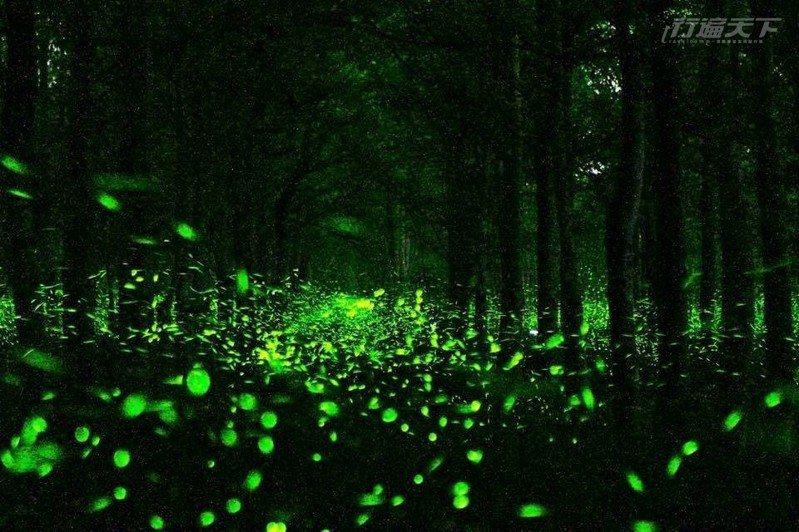 像是銀河降臨到地面一樣,螢光點點成河。