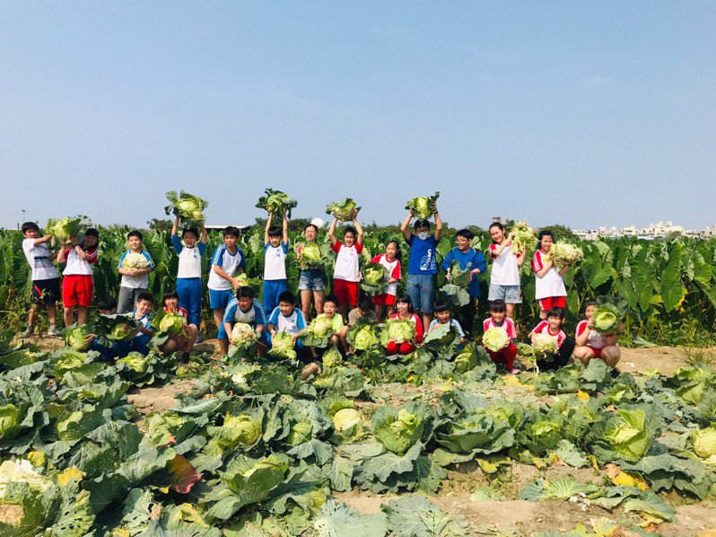 高雄市小港區桂林國小附近的高麗菜田成了疫情受災戶,學校安排「銅板價」戶外教學,小朋友可以到戶外空曠處活動,又可以搶救高麗菜農的心血。圖/桂林國小提供